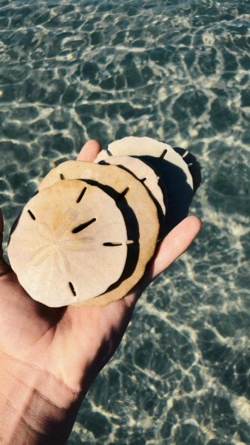 Sea Money