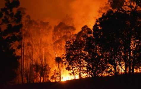 The Australian Bushfires; Called to Action