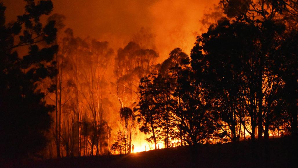https://www.sciencenews.org/article/australia-forest-ecosystem-bounce-back-after-devastating-fires